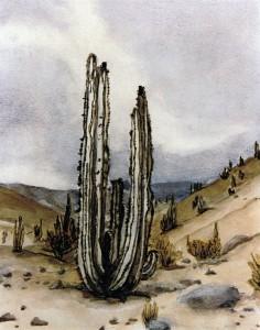 Perou_cactus_yseult_carre