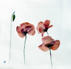coquelicots-pavots-aquarelle-pigments-naturels-copyright-yseult-carre
