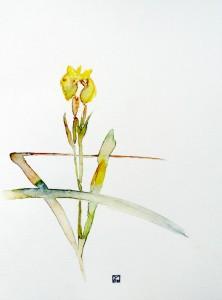 Iris royal d'étang en Sologne
