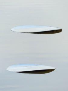 keensouhlal-deconcert--biennalesologne-copyrignt-yseultcarre