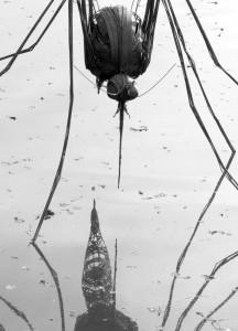 Regis Poisson - Imago - Biennale de Sologne 2015 - copyright Yseult Carré