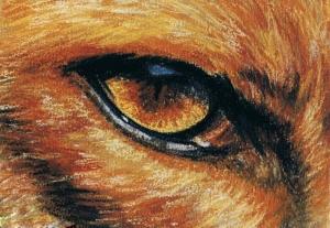 Œil de renard roux