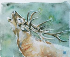 Cerf au brame © Yseult Carré