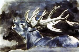 Cerf au brame bleu © Yseult Carré
