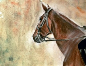 Tête de cheval Cheverny  © Yseult Carré