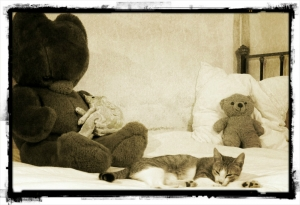 agathe-chat-et-teddys-sologne-copyright-yseult-carre