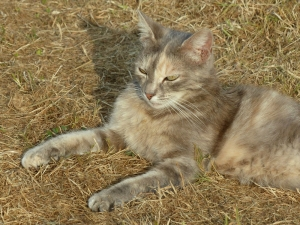 dusty-chat-sologne-2015-copyright-yseult-carre