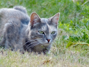 dusty-chat-sologne-copyright-yseult-carre---