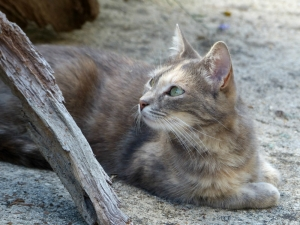 dusty-chat-sologne-copyright-yseult-carre--