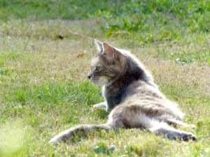 dusty-chat-sologne-copyright-yseult-carre-