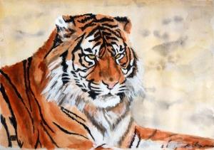 Tête de tigre © Yseult Carré