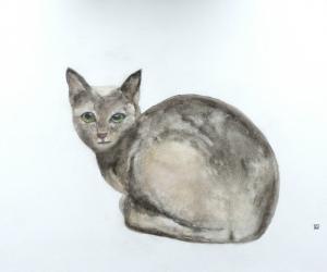 Graphite, chat bleu © Yseult Carré