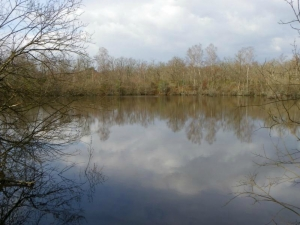 etang-sologne-montboulan-copyright-yseultcarre
