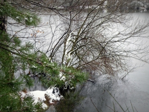 etang-sologne-neige-copyright-yseult-carre (1)