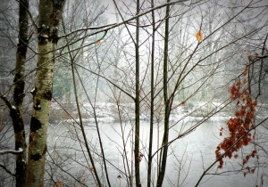 etang-sologne-neige-copyright-yseult-carre-fb