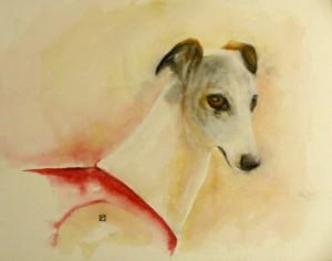 greyhound-aquarelle-pygments-naturels-et-crayons-conte-pompadour-limousin-copyright-yseult-carre