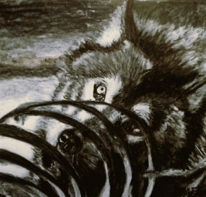 Loup et carcasse