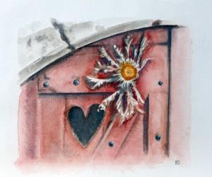 Cardabelle, fleur du causse