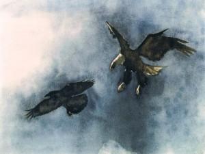 Grand corbeau et pygargue © Yseult Carré
