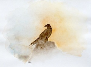 Faucon pèlerin-  Falco peregrinus © Yseult Carré