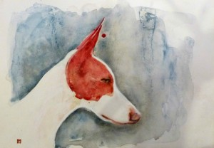 podenco-d-ibiza-chien-de-garenne-des-baleares-levrier-pompadour-2016-aquarelle-copyright-yseult-carre